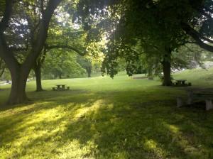 Metal detecting a park