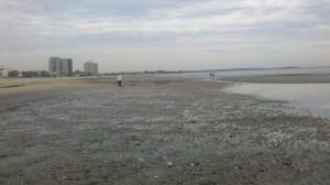Beach metal detecting